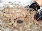 Thai fisheries alliance declares progress on sustainability