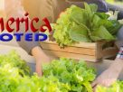 Reasons Why Organic Foods Are Worth It, Despite Being Costlier